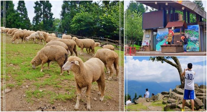 清境景點⎮青青草原綿羊秀。清境農場人氣最旺的景點~ @捲捲頭 Wonderful 品味。生活