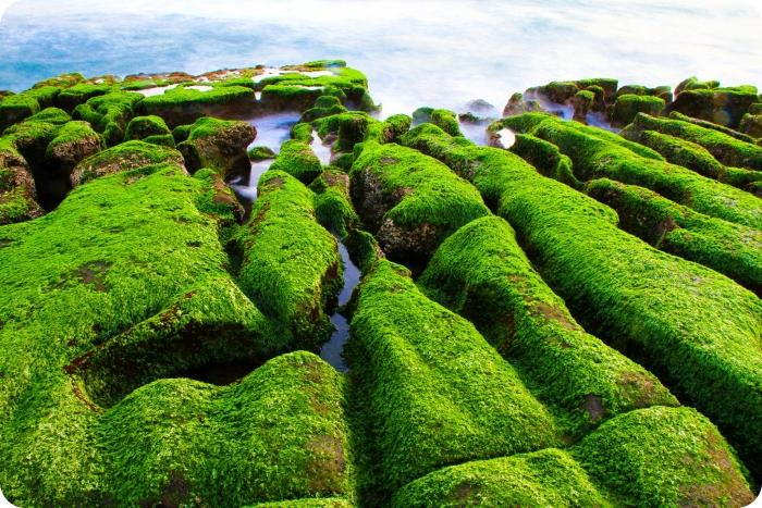 新北市石門》2021老梅石槽。季節限定的抺茶地毯,找個時間出發去! @捲捲頭 ♡ 品味生活