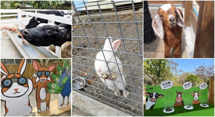 ▋台南景點 ▋樹谷農場。假日熱門景點,買門票附飼料。能餵斑比、小馬、小羊還有可愛的兔兔跟天竺鼠! @捲捲頭 ♡ 品味生活