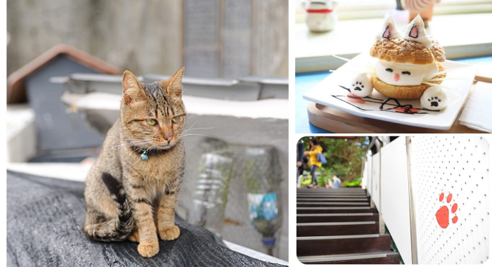 ▋猴硐貓村 ▋ 貓奴必到!世界六大貓咪天堂樂園,順遊山城小鎮散步喝咖啡~ @捲捲頭 Wonderful 品味。生活