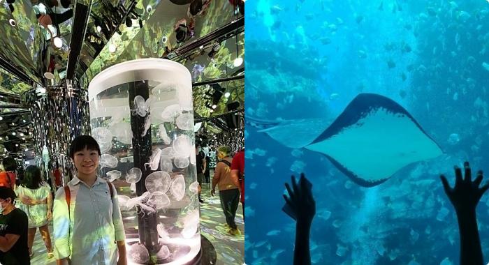 桃園新景點⎪青埔八景島水族館Xpark水生公園,7大亮點整理,開幕日、訂票資訊、票價、營業時間、夜宿水族館! @捲捲頭 ♡ 品味生活