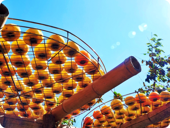 新竹景點⎪味衛佳柿餅觀光農場。季節限定的金黃色美味柿餅、夢幻黃澄澄的柿子海,還有必吃的柿子冰棒! @捲捲頭 Wonderful 品味。生活