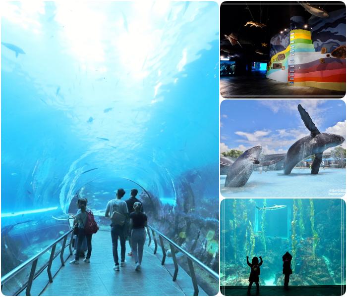 南台灣必逛10間博物館⎪夢幻紙繪森林隧道、看最美的兩個屁屁、極速煙囪溜滑梯、巨大海藻森林、實境遊戲博物館驚魂夜。特色博物館一次搞定! @捲捲頭 Wonderful 品味。生活