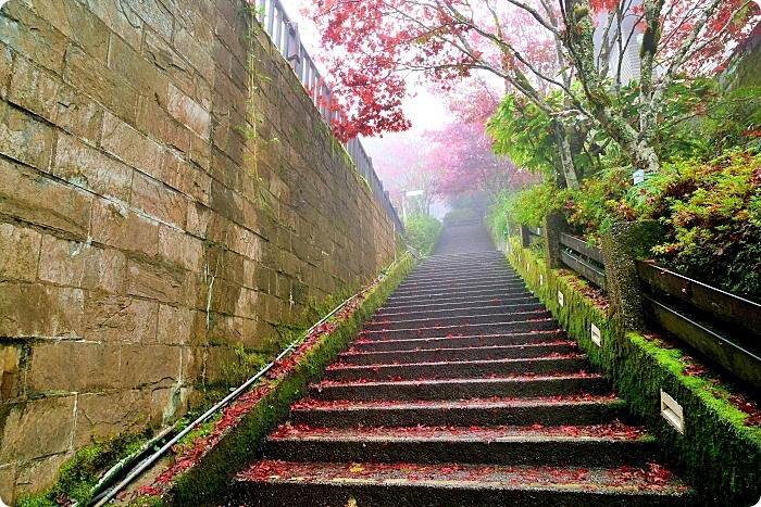 太平山一日遊⎪紅葉隧道賞楓,森林鐵道蹦蹦車,帶你台灣秋天這樣玩! @捲捲頭 ♡ 品味生活