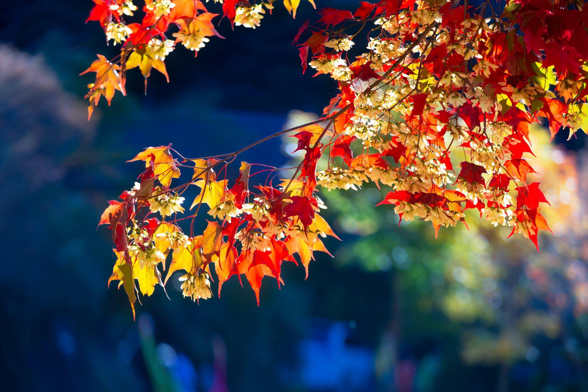 武陵農場⎪交通方式.門票資訊⎪山林換上秋日新裝。楓葉、銀杏、落羽松及油菜花田,讓你一次拍夠夠! @捲捲頭 ♡ 品味生活