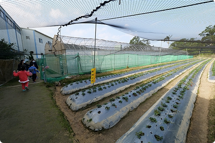 新竹景點⎮金勇DIY休閒農場X福站客家小站。採七彩繽紛新鮮蕃茄、大顆草苺,享受道地客家菜料理! @捲捲頭 Wonderful 品味。生活