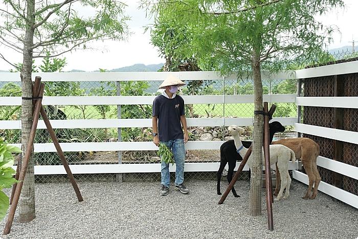 宜蘭》張美阿嬤農場。四大動物明星重磅登場!大明星水豚君|蓬蓬毛球安哥拉兔|療癒的羊駝寶寶|人氣網紅小鹿斑比|。 @捲捲頭 ♡ 品味生活