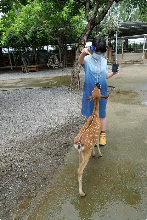 屏東恆春》鹿境Paradise Of Deer。療癒系小鹿秘境推薦你,一起奔跑追鹿去吧! @捲捲頭 ♡ 品味生活