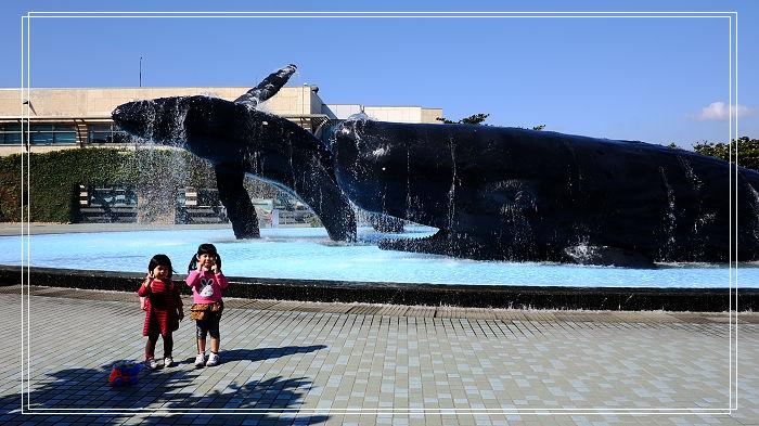 ▋墾丁景點▋海生館。海生館熱門小白鯨、企鵝館,療癒的海底隧道還有巨大的海藻森林夢幻打卡勝地~~ @捲捲頭 Wonderful 品味。生活