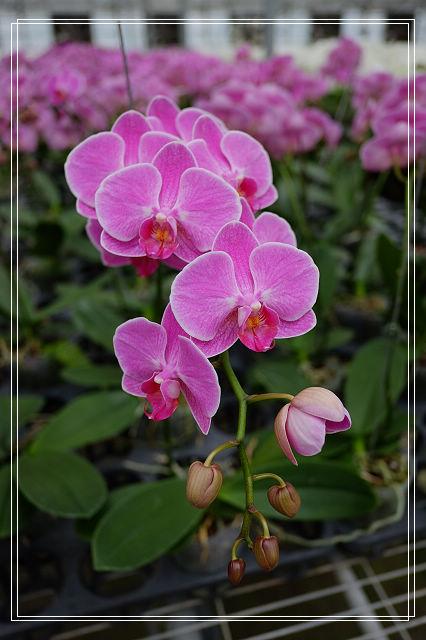 <宜蘭旅遊>員山金車蘭花園。北台灣最大蘭花園~ @捲捲頭 Wonderful 品味。生活