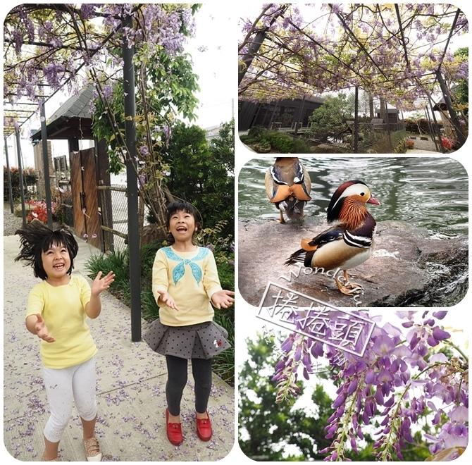 【宜蘭景點】滿綻紫藤花,相機快門按不停。就在惠欣綠花園! @捲捲頭 ♡ 品味生活