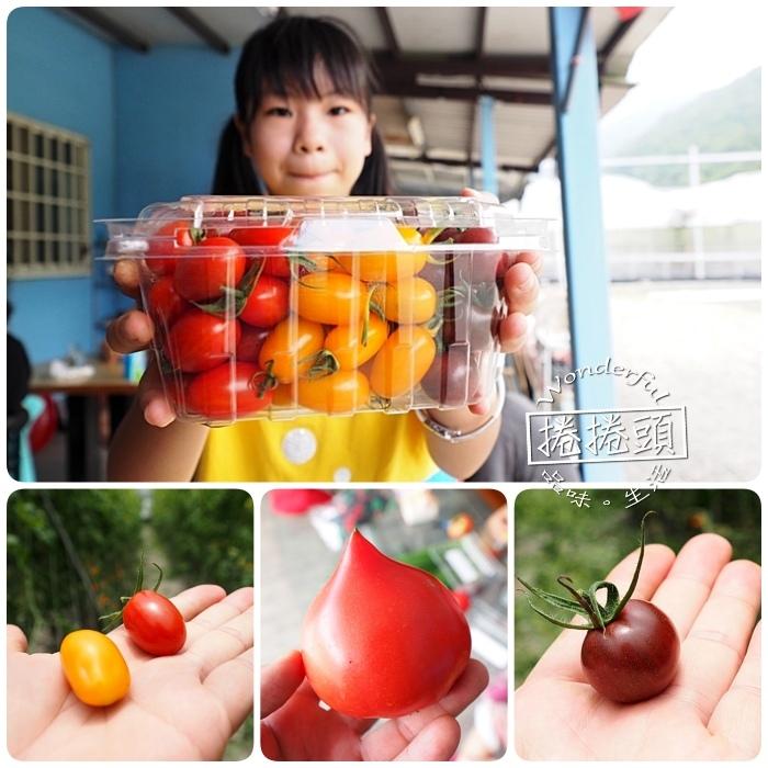 ▋宜蘭禾昌農場採菓趣 ▋新鮮無毒就是王道!三色小蕃茄、桃太郎蕃茄,一旁還有沁涼湧泉可泡腳玩水,全家出遊好地方! @捲捲頭 Wonderful 品味。生活
